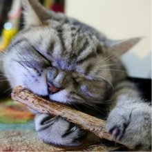 teeth cleaning sticks